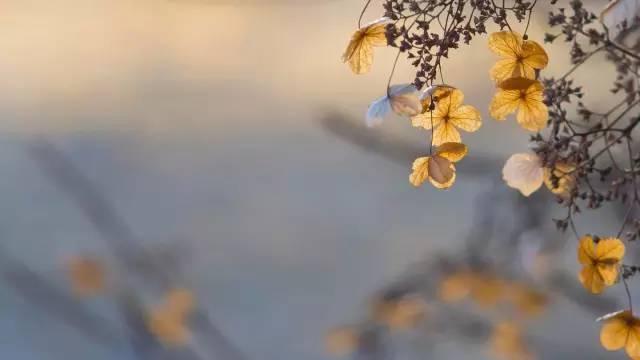 中国古代伤感诗赏析 - 九天玄女 - 九天玄女的博客