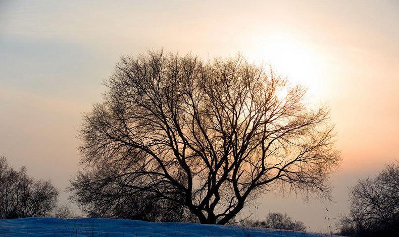河南摄影师镜头下的坝上冬日图片