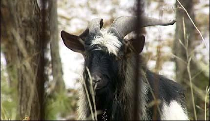 """感动全球的""""虎羊CP""""分了!因为羊太作 - 海阔山遥 - ."""