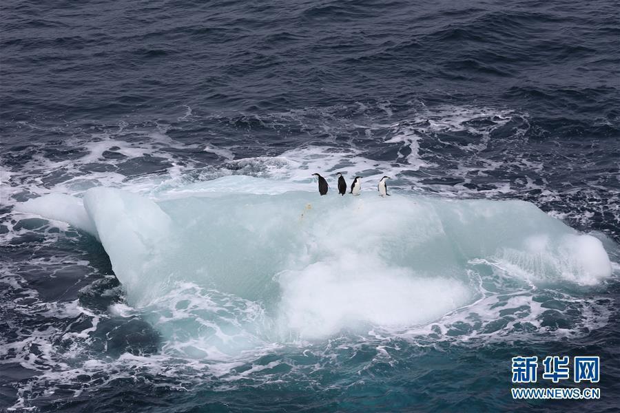 入海,并在随风随流漂荡的过程中逐步消解.冰山是研究南极气候变
