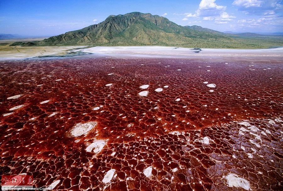 】在坦桑尼亚和肯尼亚交界处的东非大裂谷,纳特龙湖是最大的碱湖图片