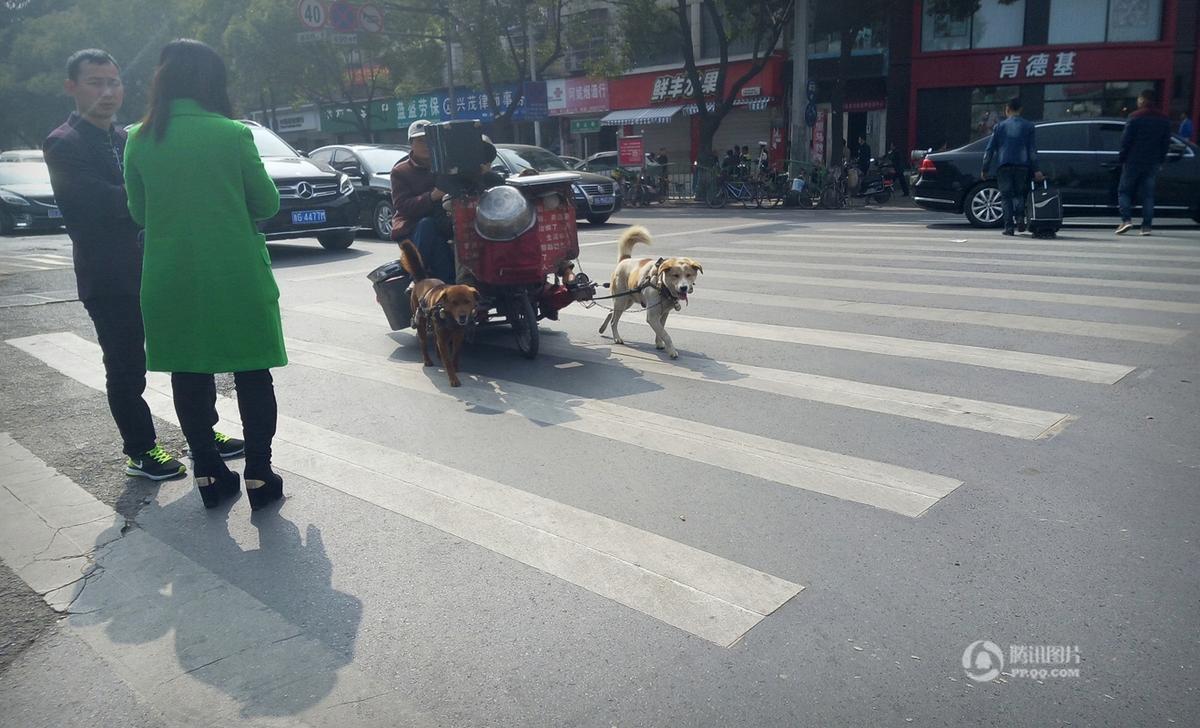 老年夫妇自驾改装狗拉车上路引围观 - 海阔山遥 - .