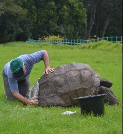 184岁高龄乌龟出生后第一次洗澡 - 海阔山遥 - .