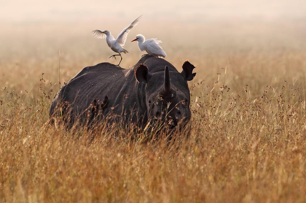 野生动物摄影:非洲的正确打开方式