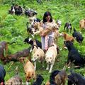 哥斯达黎加狗岛 900余流浪狗的天堂