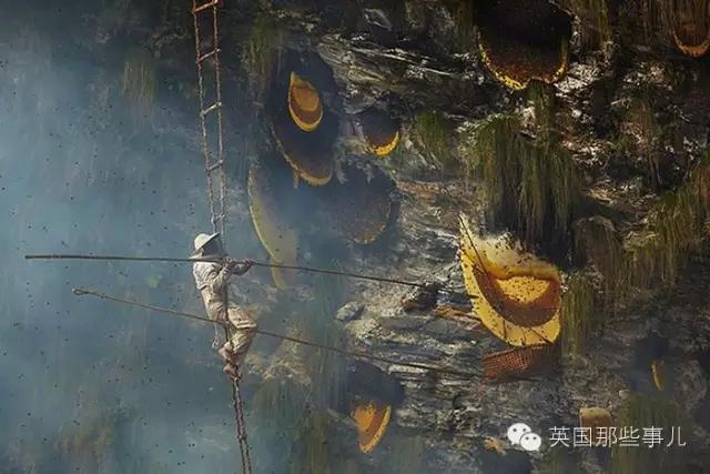被世界上最大的蜜蜂蜇爆,他们用生命采蜜 - 海阔山遥 - .
