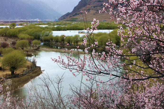 西藏的春天美如画 - 海阔山遥 - .