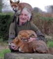 3只狐狸和老人如影随形