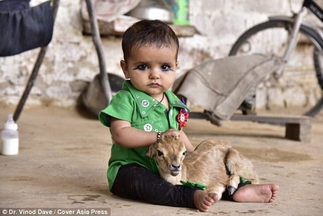 印度部族女子母乳喂幼鹿:它们就像我们的孩子 - 海阔山遥 - .