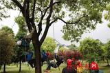 """苏州校园将开设""""爬树课"""" 要计入学期成绩"""