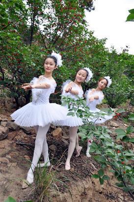 美女樱桃树下跳芭蕾_组图青农大美女樱桃树下跳芭蕾网友扎不扎