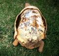 乌龟壳被烧光