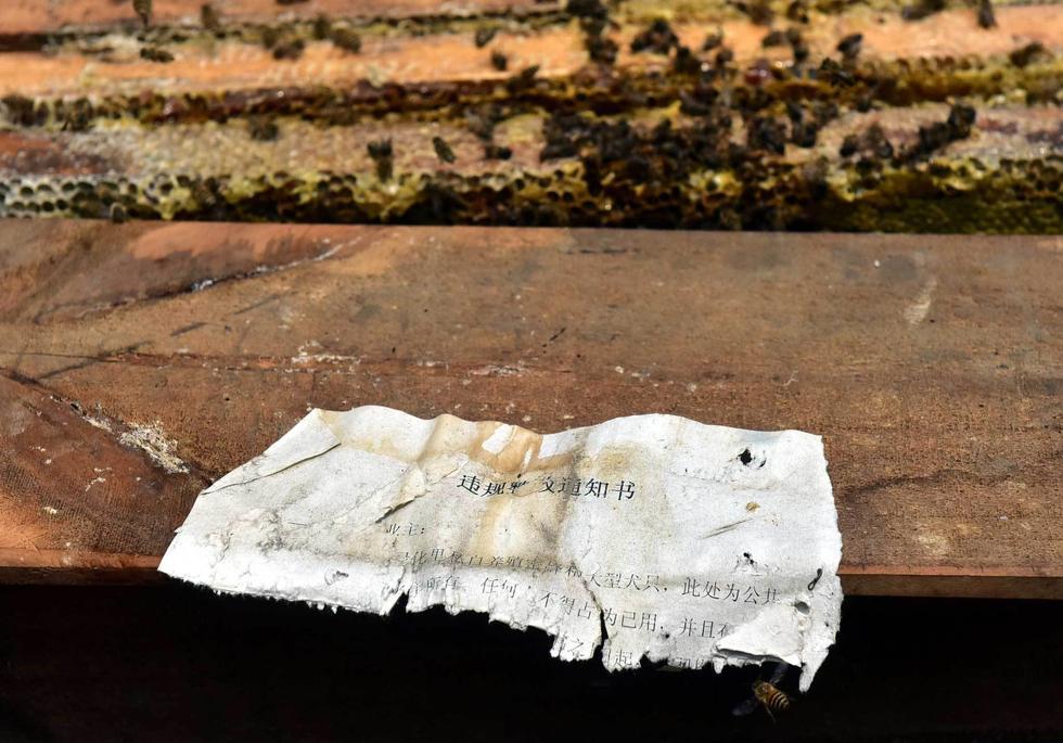 男子养蜂扰民拒搬 6万只蜜蜂被毒死 - 海阔山遥 - .