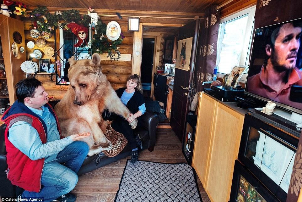 俄夫妇养270斤熊23年 每日同桌进餐 - 海阔山遥 - .