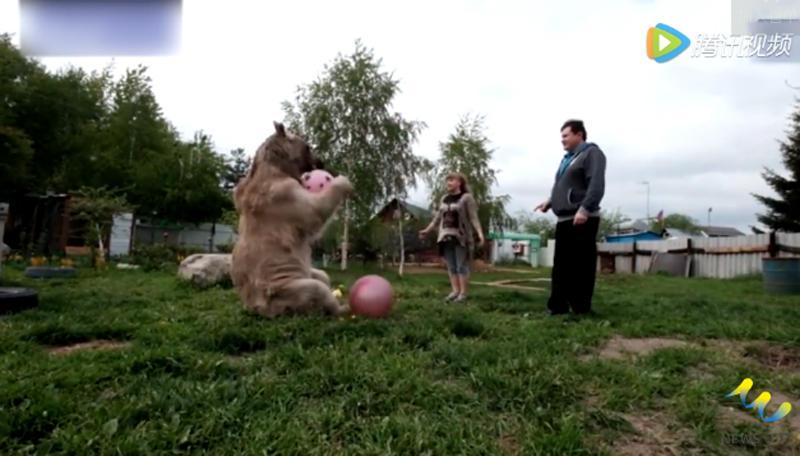 【转载】俄罗斯一夫妇养270斤熊23年! - liusongjifan2 - liusongjifan2的博客