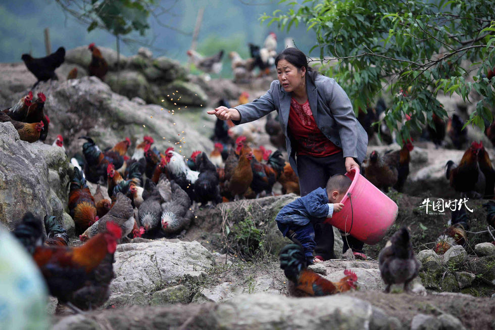 中国焦点 博客