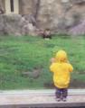 男孩动物园看狮