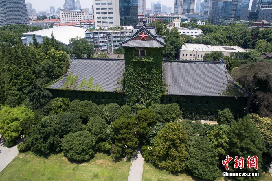 """""""绿色树屋"""".眼下正值初夏时节,南京大学鼓楼校区内长势良好的"""