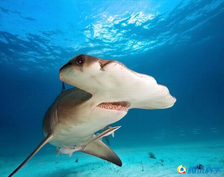 鲨鱼的身体结构图名称