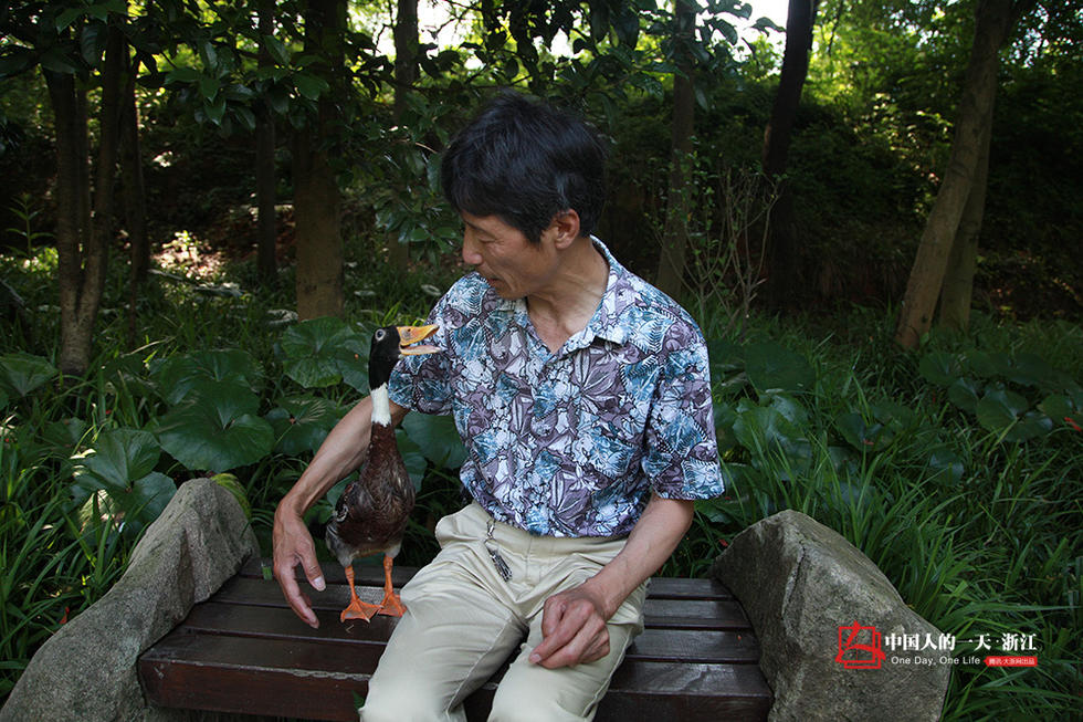 名星慢像-杭州明星宠物鸭神奇通人性