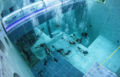 潜水胜地!40米深游泳池成世界之最