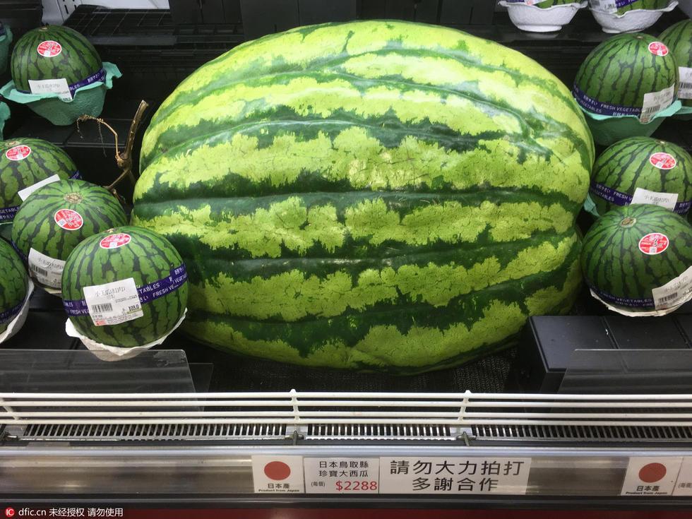 """【图片新闻】日本""""珍宝大西瓜""""香港上市 每个售价1900元 - 耄耋顽童 - 耄耋顽童博客 欢迎光临指导"""