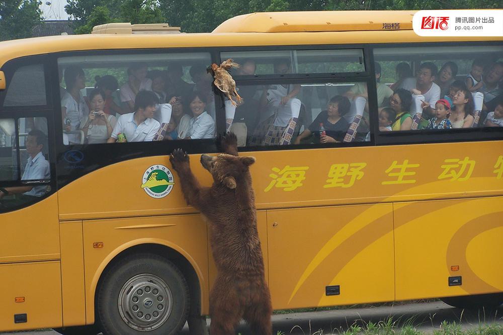 【图话】猛兽出没!危险动物园如何安全? - 海阔山遥 - .