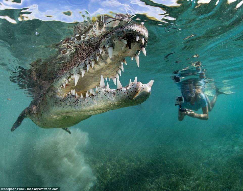 不要命 外国父女伴游2米长鳄鱼 - 海阔山遥 - .