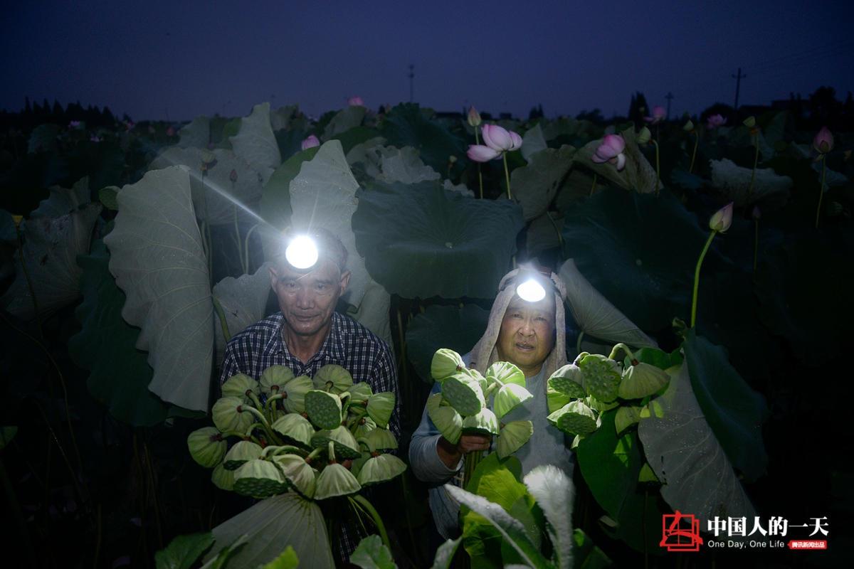 中国人的一天:老夫妻每天凌晨出门采莲 - 海阔山遥 - .