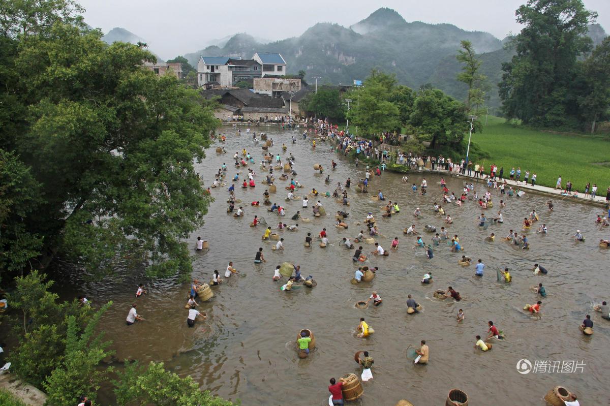 贵州百名村民跳进水塘捕鱼 场面壮观 - 海阔山遥 - .
