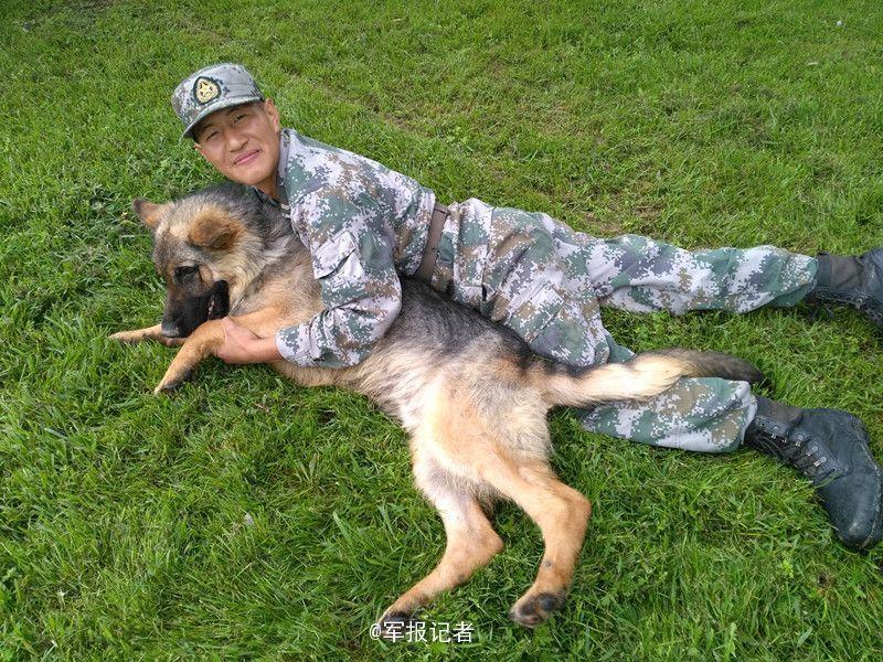 【图片新闻】老军犬守护边境线长达8年 近期光荣退役 - 耄耋顽童 - 耄耋顽童博客 欢迎光临指导