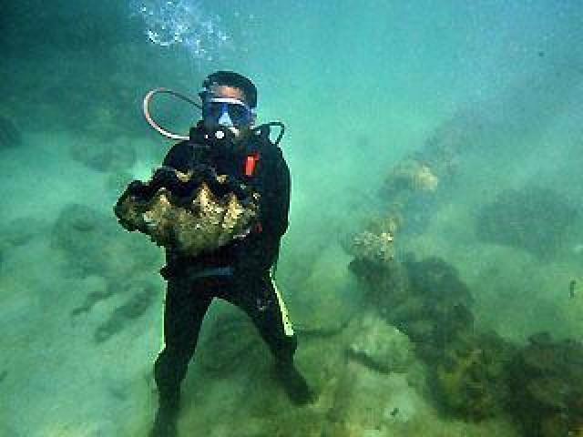 【图片新闻】世界最大珍珠价值一亿美金 竟被渔民雪藏十年 - 耄耋顽童 - 耄耋顽童博客 欢迎光临指导
