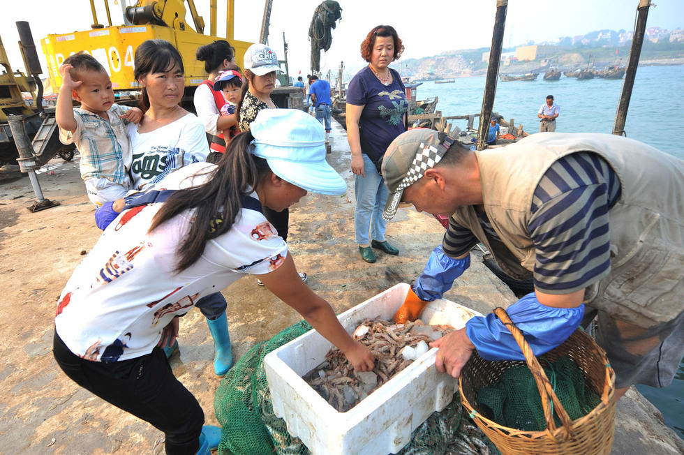 【图片新闻】青岛开海季海捕对虾论只卖 售价8元 - 耄耋顽童 - 耄耋顽童博客 欢迎光临指导