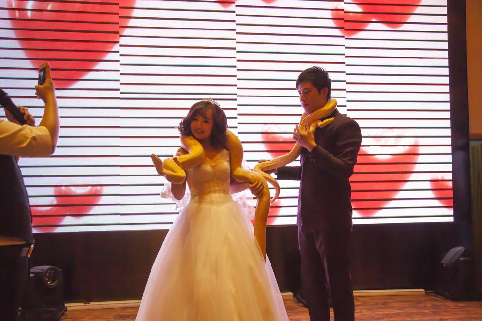 【图片新闻】吉林一对新人婚礼上互赠黄金蟒做礼物 - 耄耋顽童 - 耄耋顽童博客 欢迎光临指导