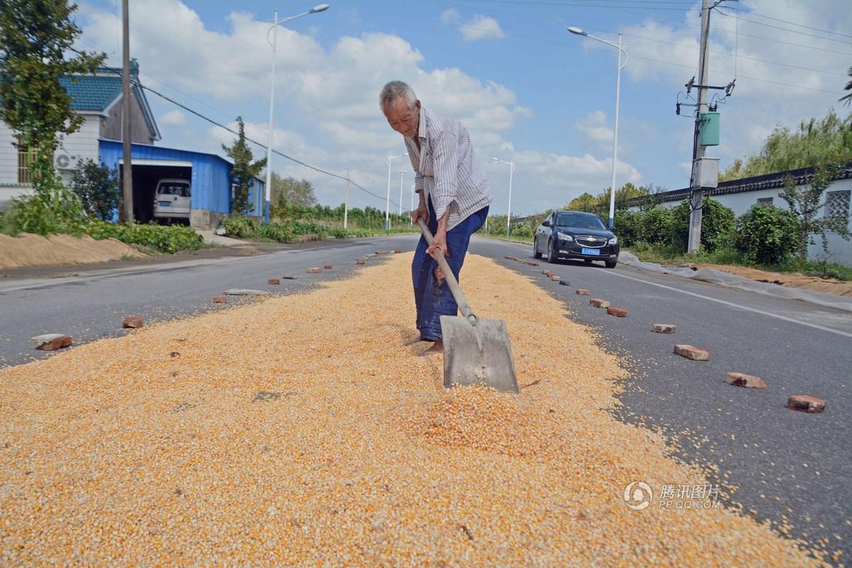 9旬老农夫妇的田园生活 一粒玉米都要捡起 - 海阔山遥 - .