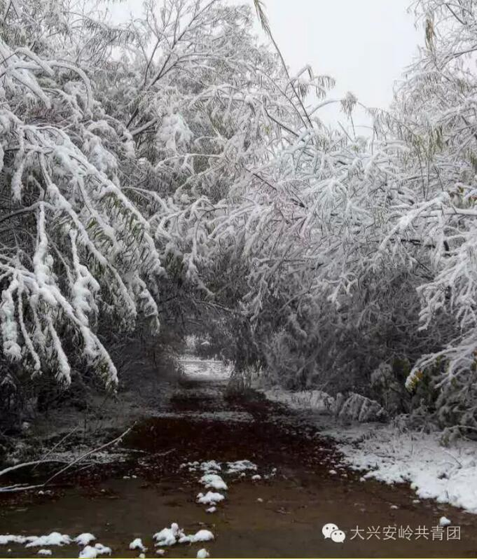 下雪啦!还没到十月 大兴安岭的初雪已惊艳(组图)