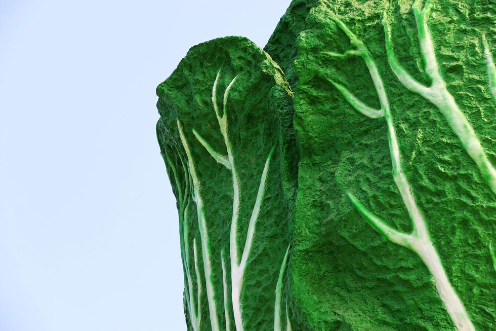 组图:河南安阳建白菜雕塑 高19米直径8米 - 海阔山遥 - .