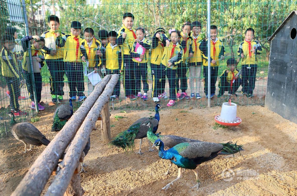 """山东青岛一校园建""""动物园"""" 30余种动物萌萌哒 - 海阔山遥 - ."""