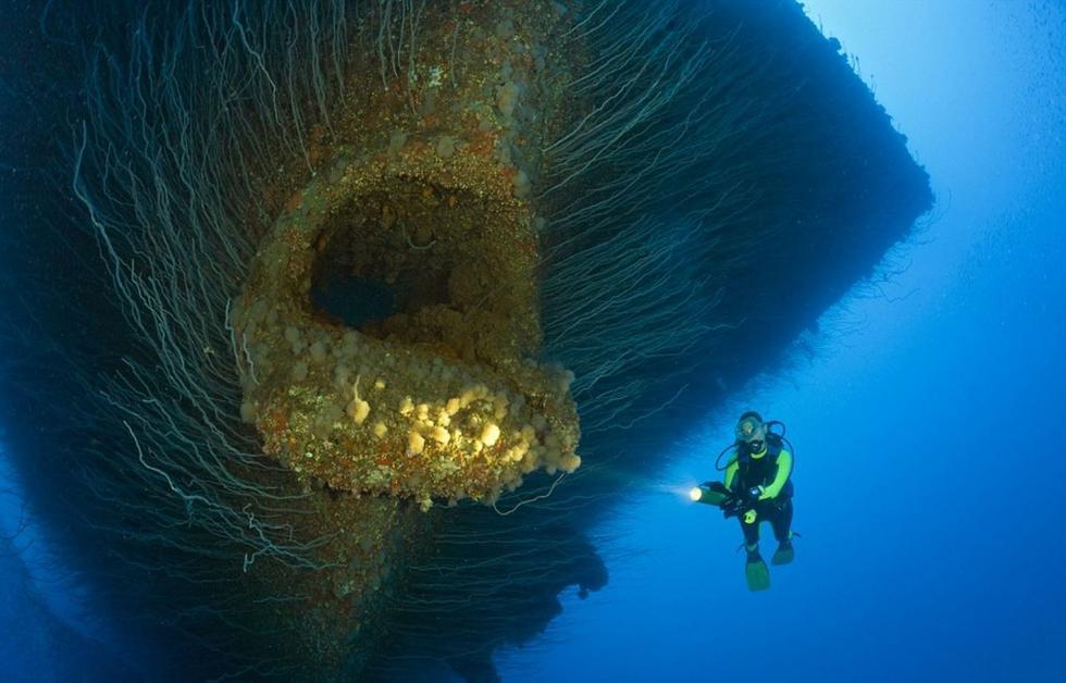 盘点深海下的巨型生物 恐怖又奇幻