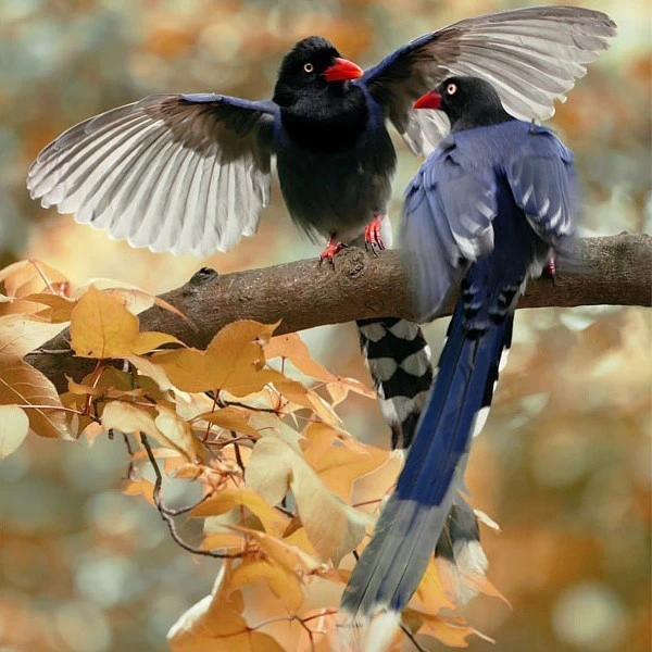 【艺术图片】鸟来鸟去山色里 - 耄耋顽童 - 耄耋顽童博客 欢迎光临指导