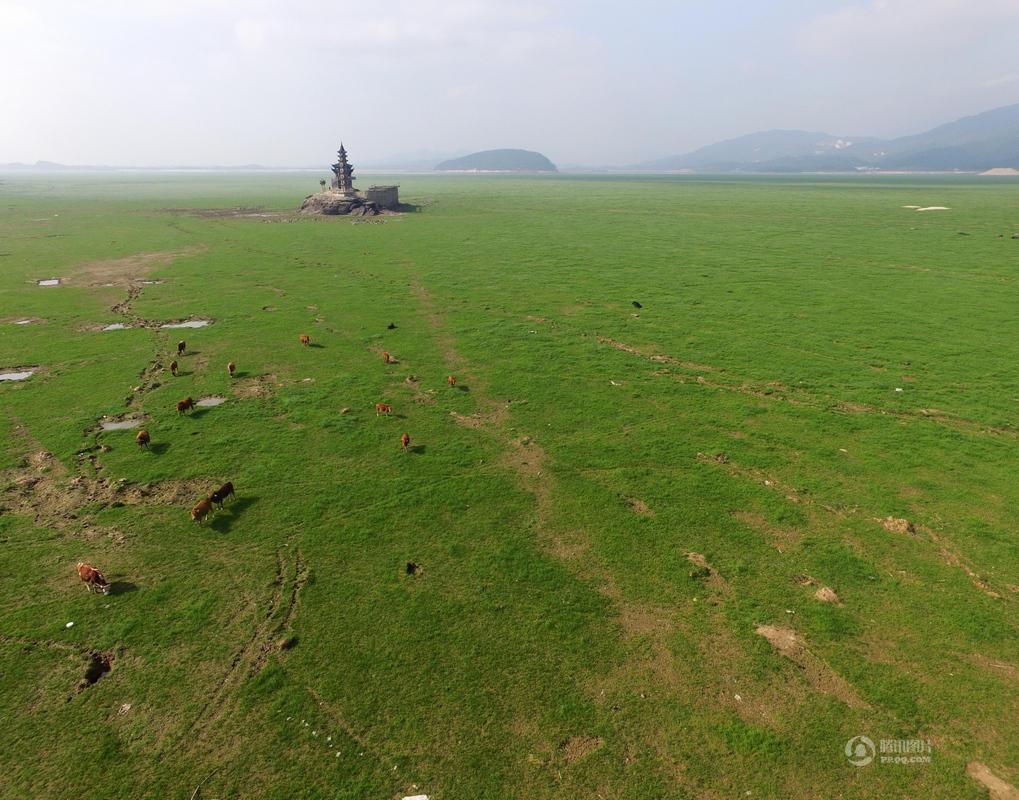 """中国最大淡水湖鄱阳湖变""""草原"""" - 海阔山遥 - ."""