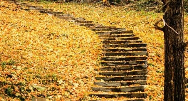 湖北黄���ny.�_湖北最黄的一组图来了 你不可错过的风景