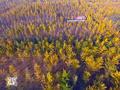 航拍徐州银杏大道 满眼金黄无比壮观