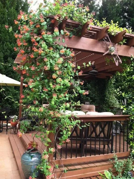 用花架这样装饰你的庭院2016.11.30 - fpdlgswmx - fpdlgswmx的博客