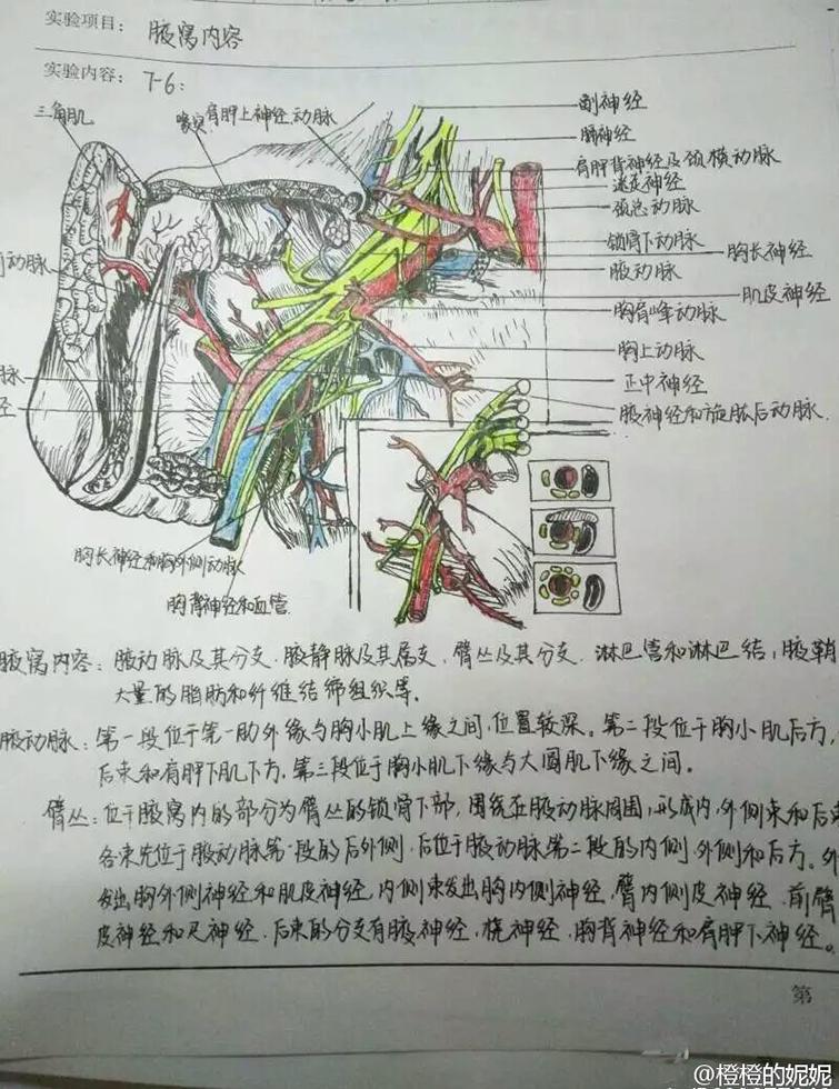 神技能!医学生手绘笔记精细到血管