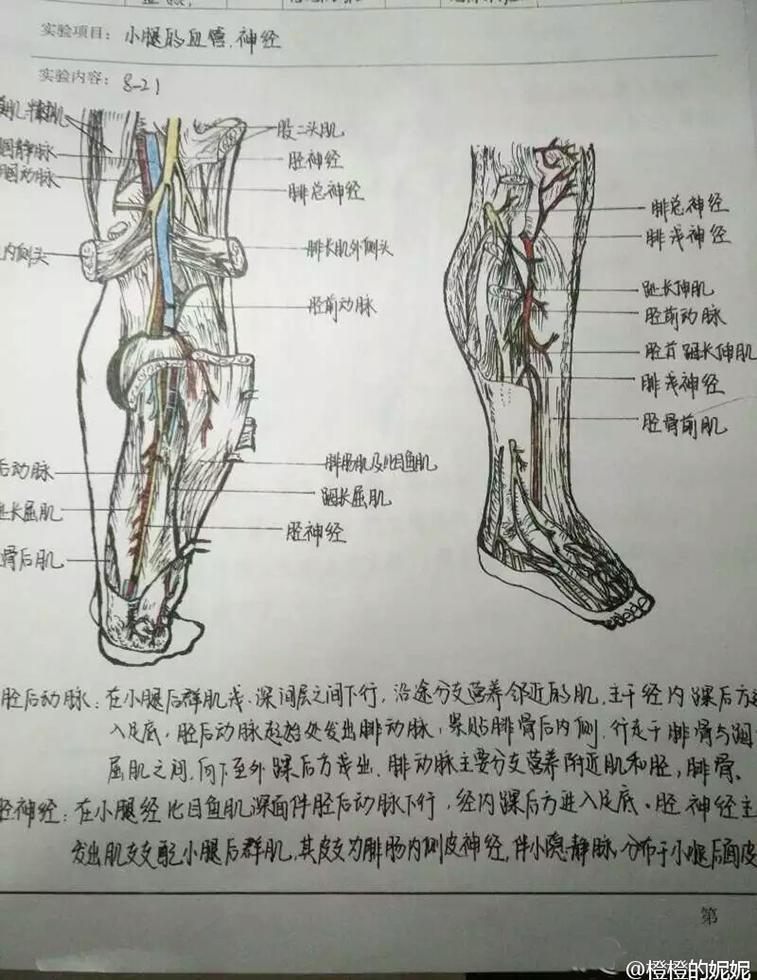 组图:神技能!医学生手绘笔记精细到血管