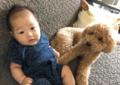 日本萌娃与贵宾犬
