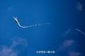 组图:不一样的歼20 翼尖拉出优美弧线