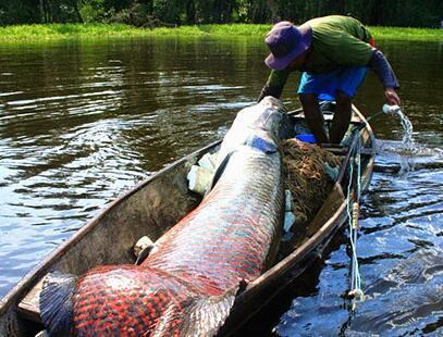 渔夫捞到3米长的巨型鱼 险些将船给打翻 - 海阔山遥 - .