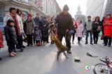 滨江道耍猴人每日百元收入
